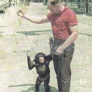 Magilla the Chimpanzee, Eastern Pet Shop, 1960s